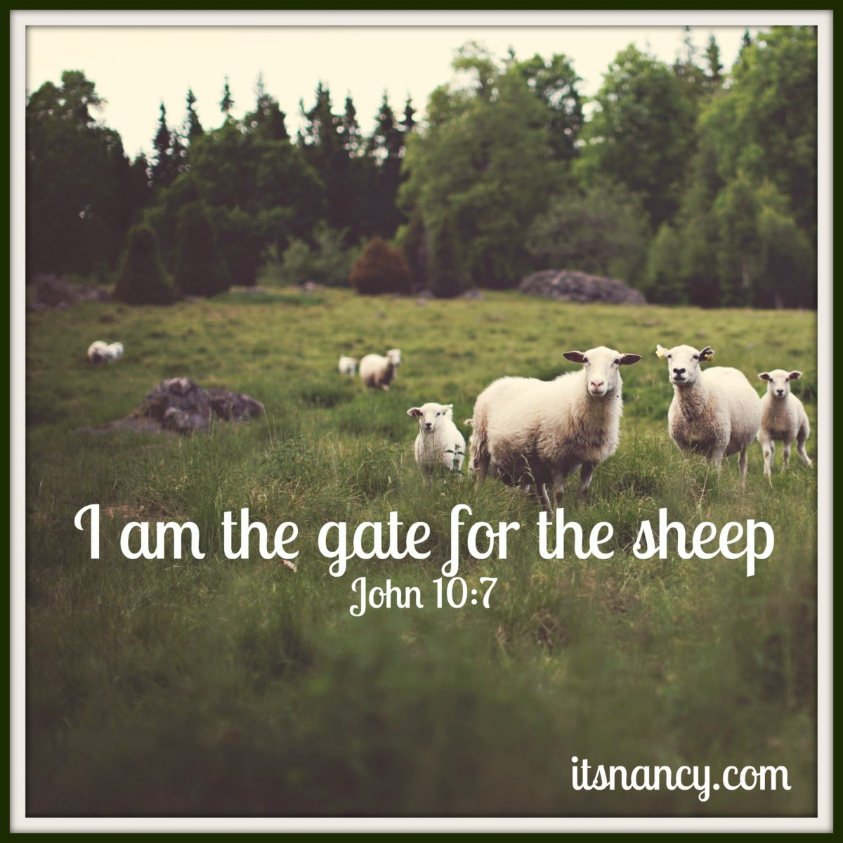 I Am the Gate for the Sheep